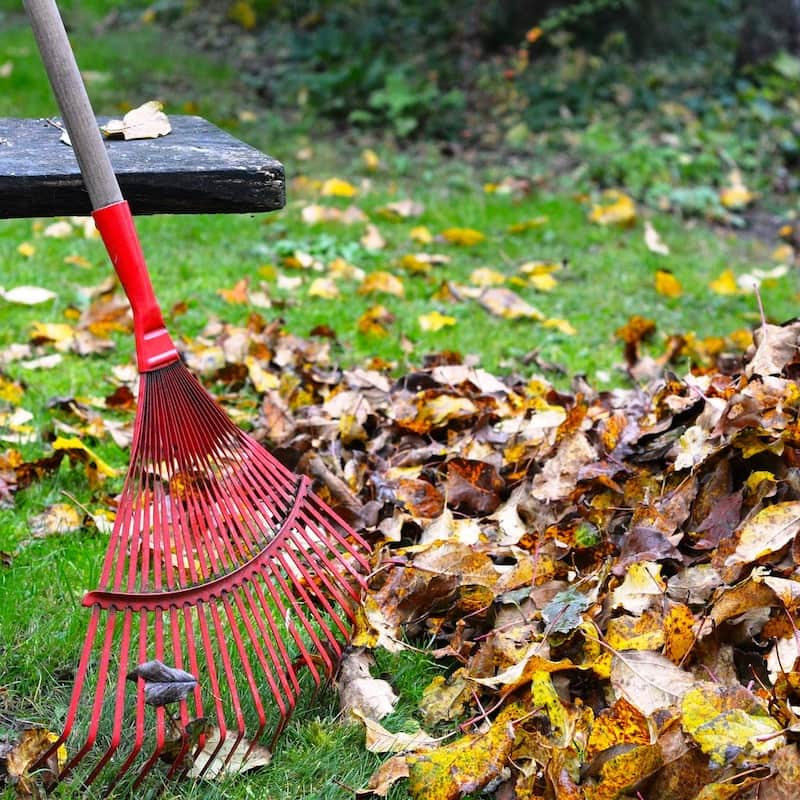 rake with dry leaves